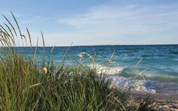 Coast of dune grass looking out into ocean